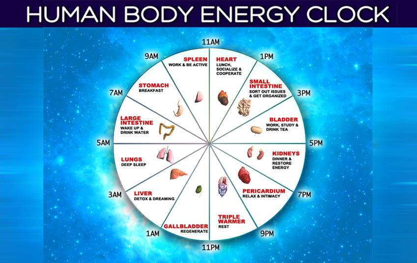 body energy clock
